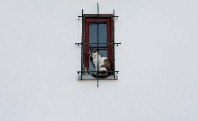 Cat sitting at window