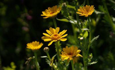 Yellow flowers, park, plants, flower
