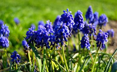 Flowers, lavenders, plants