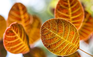 Leaves, yellow leaves, autumn, blur, close up