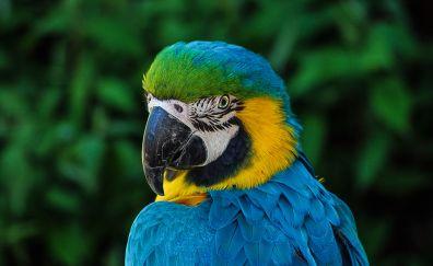 Muzzle, bird, parrot, macaw