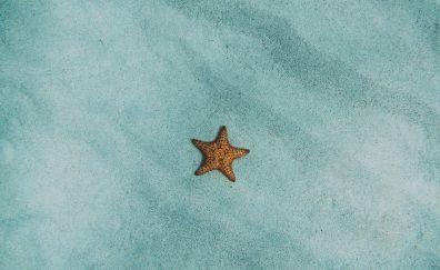 Starfish, sand, fish, 4k