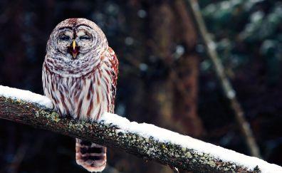 Winter, blur, yawn, owl, predator, bird