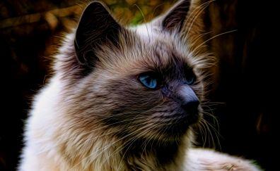 British shorthair, cat muzzle, art