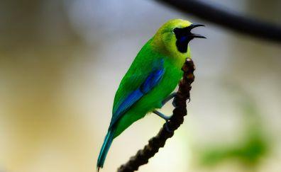 Green small bird, wildlife, close up