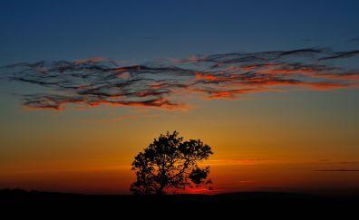Horizon, sunset, clouds, tree