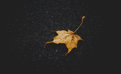 Dew drops on yellow leaf