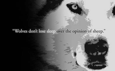 Quote on wolf