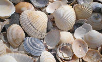 Sea shells, pebbles