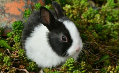 Hare, bunny, Rabbit, cute animal