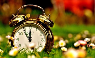 Alarm clock, flowers, blur, meadow