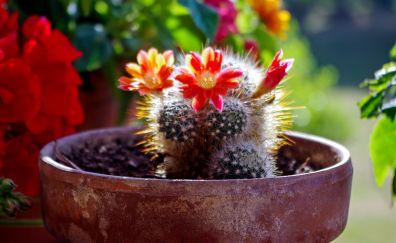 Succulents cactus flower bloom