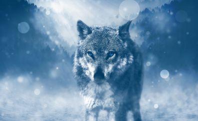 Wild wolf, animal
