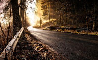 Road, forest, sunshine, haze