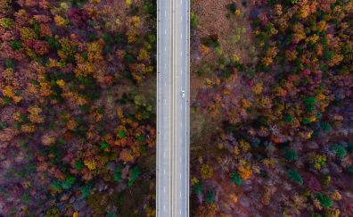 Road, trees, aerial view, autumn, 4k