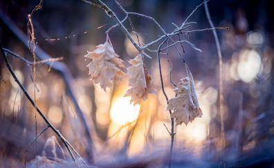 Leaf, leaves, sunrise, fall, nature