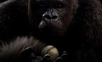 Gorilla, monkey, Mr. Go, 2013 movie