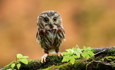 Baby child of owl bird