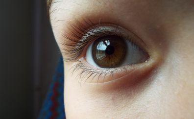 Eye brown, close up