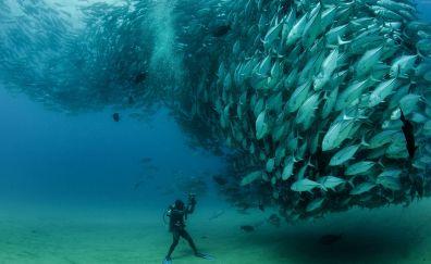 Underwater fishes wallpaper