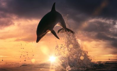 Dolphin jump out of ocean
