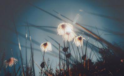 Plants, sunlight, grass threads