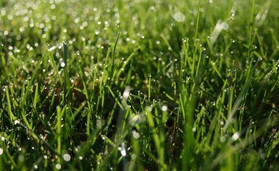 Dew of morning in spring