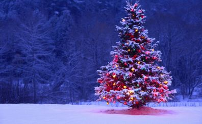 Christmas tree lights snow forest holiday