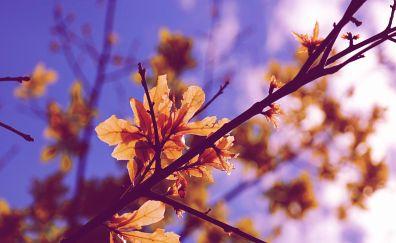 Leaf, fall, tree branch