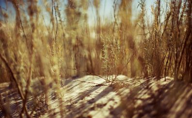 Dried Grass, plants, sand
