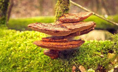 Mushroom, fungus, moss