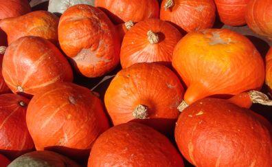 Pumpkin vegetables