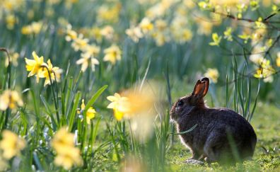 Hare, rabbit, cute animal, meadow, plants