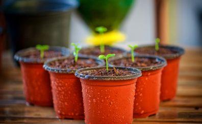 Garden flowerpot, watering, bloom, plants