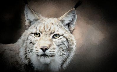 Lynx, cat, predator, muzzle, art