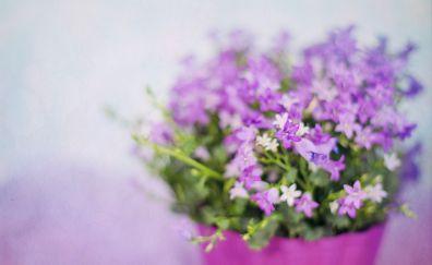 Small Purple flowers, blur, vase