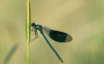 Dragonfly, insects, wings