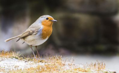 Little beautiful bird