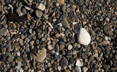 Gravel beach, stones, rocks, sea shell