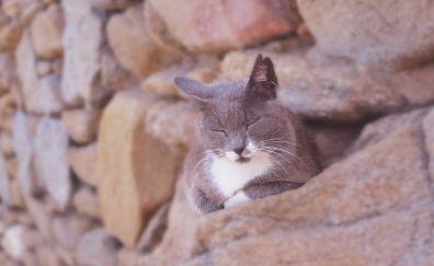 Sleep, furry cat, animal, stone wall
