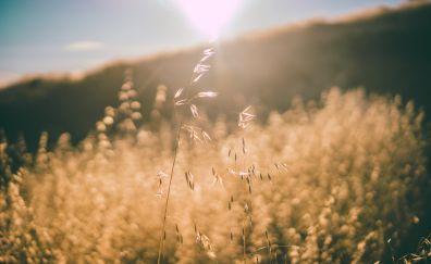 Golden grass threads