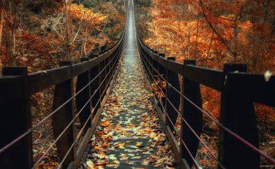 Wooden bridge in forest nature