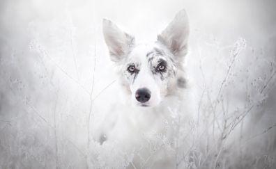 White dog muzzle, animal