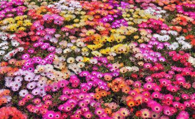 Garden flowers beautiful