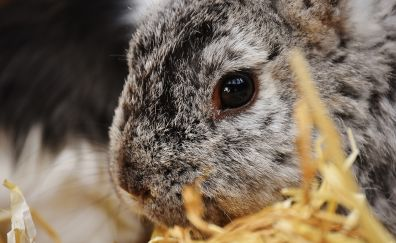 Rabbit, bunny, hare, animal, muzzle