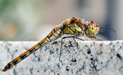 Dragonfly insects, photography, close up