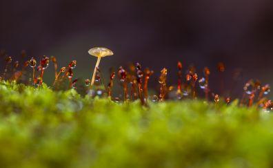 Mushroom, moss, small plants