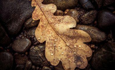 Dry leaf water drops