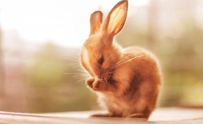 Cute bunny rabbit animals