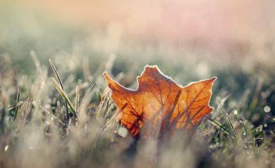 Leaf in grass field